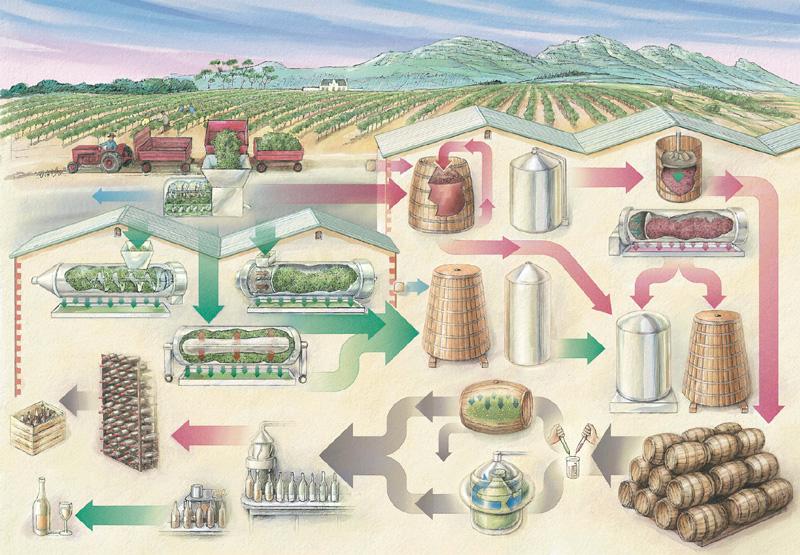 Wine Process